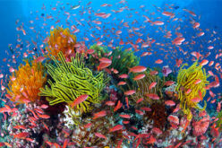Scientists Call for Pro-active Role to Protect Coral Reefs