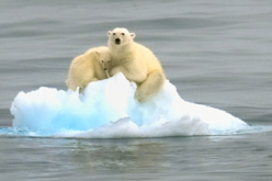 Bears from Space: Scientists Try to Count Polar Bears Using Satellite Imagery