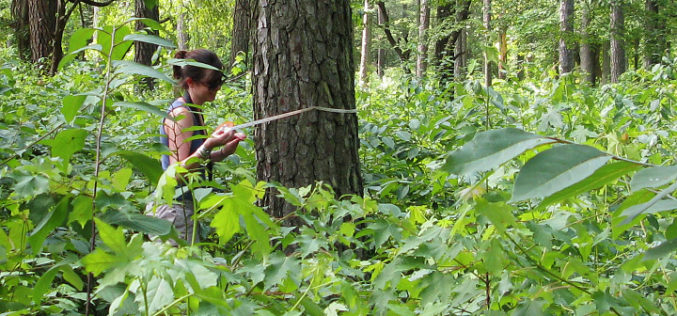 Institute of Forest Genetics and Tree Breeding to Map Trees in Tamil Nadu using GIS