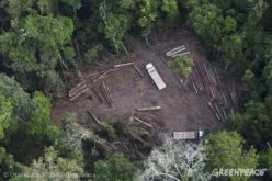 Activists Use GPS Systems to Track Illegal Logging Operations in Brazil's Amazon Rainforest