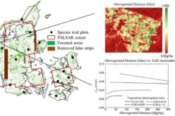 L-Band SAR Backscatter Related to Forest Cover, Height and Aboveground Biomass at Multiple Spatial Scales across Denmark