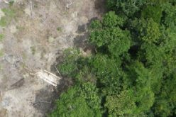 Radar Satellite Data for Mapping Dynamics of Deforestation and Forest Degradation