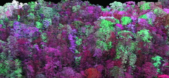 Laser Based Forest Mapping Instrument for Space Station